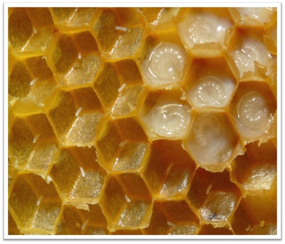 معماری زنبور عسل