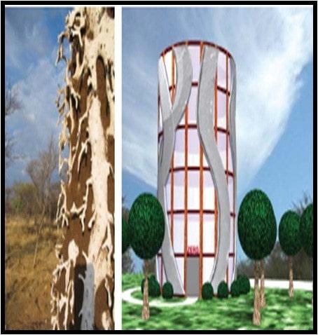 معماری مورچه